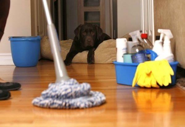 уборка за животными